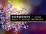 Importance Of Hormones And Hormone Imbalance