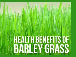 Barley Grass Health Benefits Side Effects Recipe