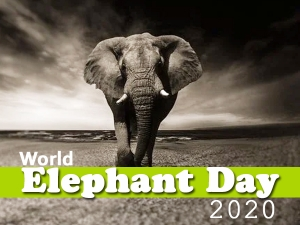 World Elephant Day Interesting Facts About Elephants