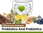 What Is The Difference Between Prebiotics Probiotics And Importance