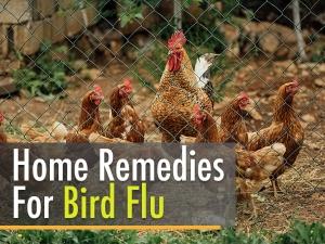 Herbal Home Remedies To Fight Bird Flu