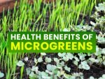 Microgreens Nutrition Health Benefits Types And How To Eat