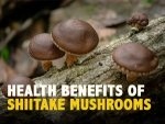 Shiitake Mushrooms Nutrition Health Benefits And Ways To Eat