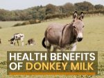 Donkey Milk Health Benefits And Downsides