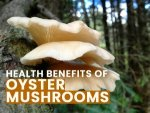 Amazing Health Benefits Of Oyster Mushrooms