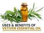 Vetiver Essential Oil Uses And Health Benefits
