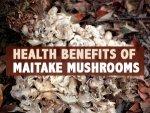 Nutrition Health Benefits Maitake Mushroom