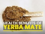 Science Backed Health Benefits Of Yerba Mate