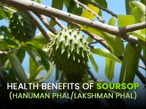 Health Benefits Of Soursop Hanuman Phal