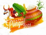 Pongal Wishes Quotes Images Greetings Facebook Whatsapp Status Messages