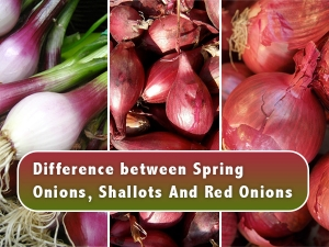 Difference Between Spring Onions Shallots And Red Onions