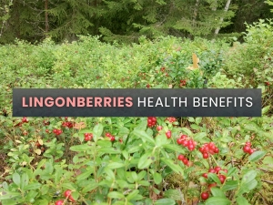 Health Benefits Of Lingonberries With Ways To Consume And Recipe