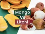 Mango Vs Litchi Who Is The Winner Of The Best Summer Fruit