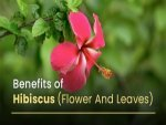 Evidence Based Health Benefits Of Hibiscus Flower And Leaves