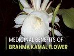 Medicinal Benefits Of Brahma Kamal Flower