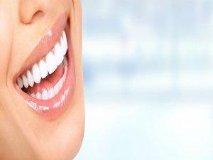 Teeth And Associated Organs