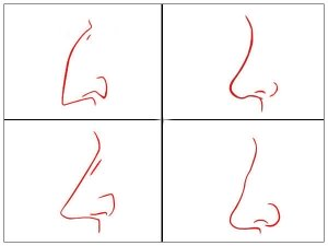 Nose Shape Can Define Your Personality