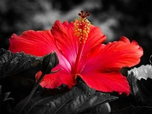 10 Ways To Use Hibiscus For Healthy & Shiny Hair
