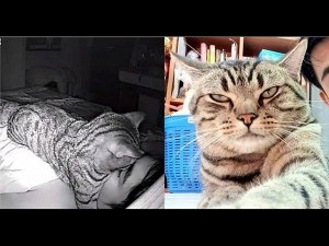 He Is Facing Breathing Problem As His Pet Cat Sleeps On His Face!