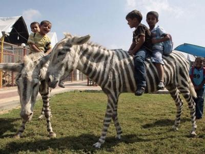 Disturbing Pics Of Zoo