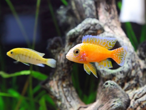 Why Aquariums Are Auspicious For Your House