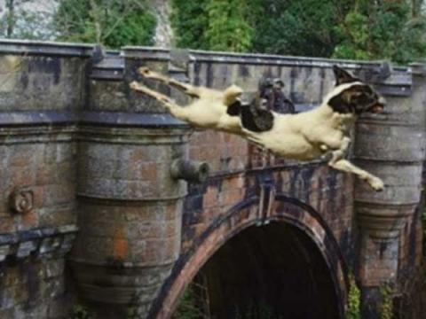Have You Heard About Dog's Suicide Bridge?