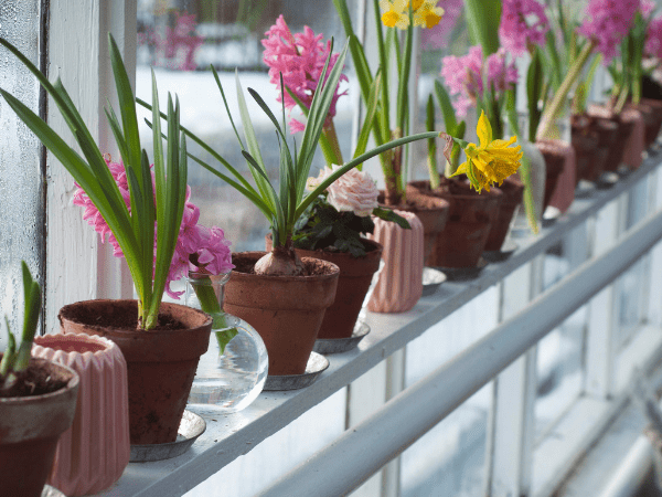 Stunning Flowers To Grow This Winter