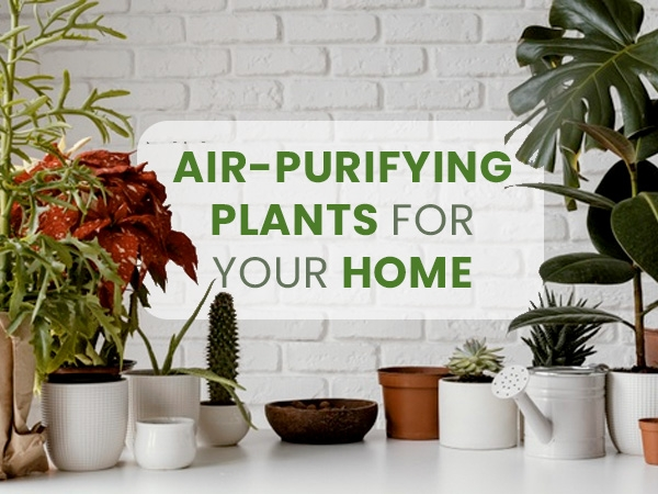 World Environment Day 2021: A List Of All The Air-Purifying Plants For Your Home Available In India