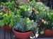Vegetables That Can Grow In Containers