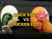 Why Duck Eggs Can Be A Better Alternative To Chicken Eggs?